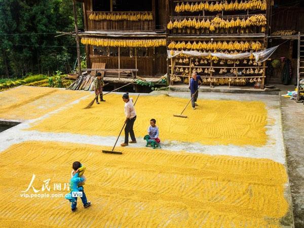 报告预测未来10年中国农业结构将不断优化