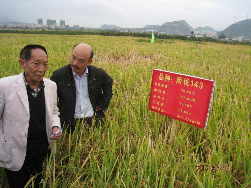 袁隆平的理论遗产从55年前的开创性论文到杂交水稻总设计师